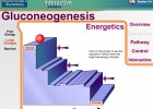 Video: Gluconeogenesis | Recurso educativo 39920