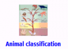 Animal classification | Recurso educativo 48358
