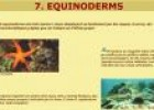 Equinoderms | Recurso educativo 25335
