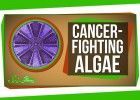 Genetically Engineered Cancer-Fighting Algae | Recurso educativo 748666