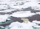 Sea Ice : Feature Articles | Recurso educativo 732540