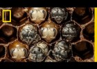 Amazing Time-Lapse: Bees Hatch | Recurso educativo 773701